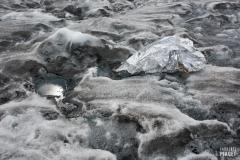 Survie_Glacier_d_Aletsch_Laurence_Piaget-Dubuis-6256