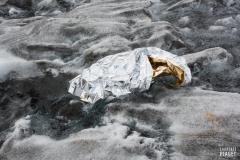 Survie_Glacier_d_Aletsch_Laurence_Piaget-Dubuis-6257